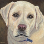 Ozzie, portrait of a Yellow Labrador Retriever