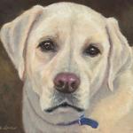 Ozzie, portrait of a Yellow Labrador Retriever