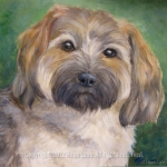 Alice, Havanese Portrait by Hope Lane