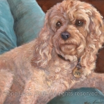 Ivy, the Cockapoo painting by Hope Lane