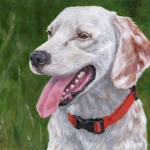 Huckleberry, portrait of an English Setter by Hope Lane